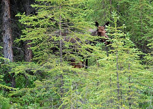 2008 JULY trip to AK denali 1951