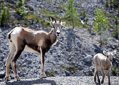 2008 JUNE JULY trip to AK Canada 2084
