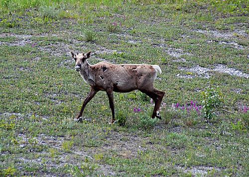 2008 JUNE JULY trip to AK Canada 2086