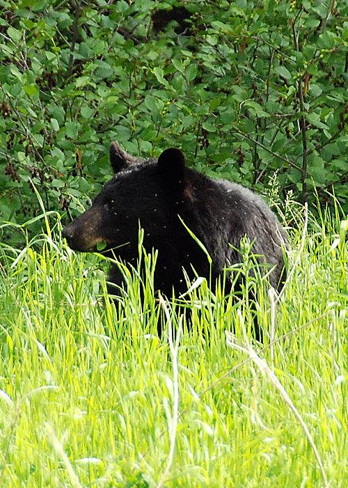 2008 JUNE JULY trip to AK Canada 2126