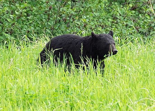 2008 JUNE JULY trip to AK Canada 2123