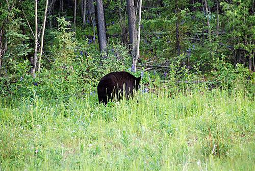 2008 JUNE JULY trip to AK Canada 2157