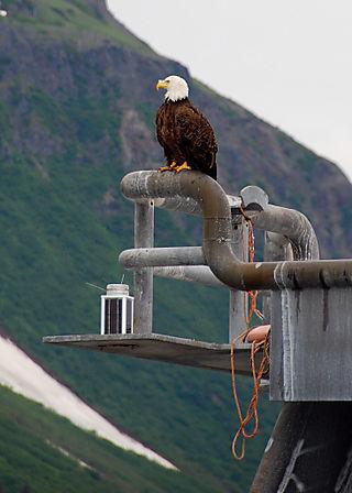 2008 JULY trip to AK seward 1920