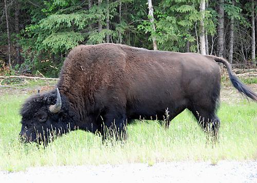 2008 JUNE JULY trip to AK Canada 2116