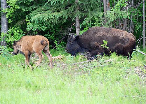 2008 JUNE JULY trip to AK Canada 2115