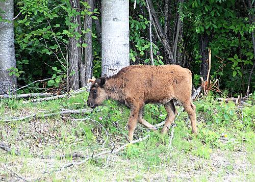 2008 JUNE JULY trip to AK Canada 2119