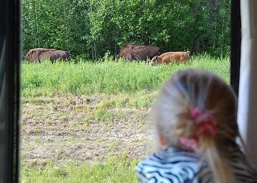 2008 JUNE JULY trip to AK Canada 2120