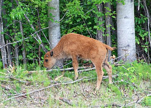 2008 JUNE JULY trip to AK Canada 2117