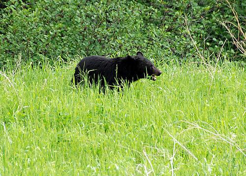 2008 JUNE JULY trip to AK Canada 2124