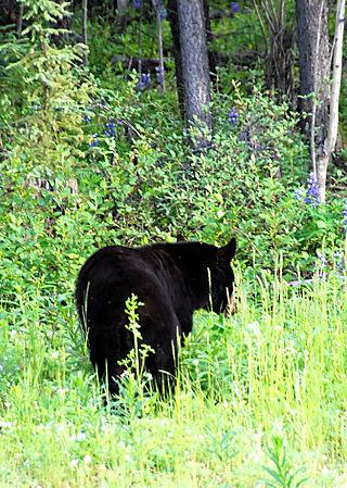 2008 JUNE JULY trip to AK Canada 2113
