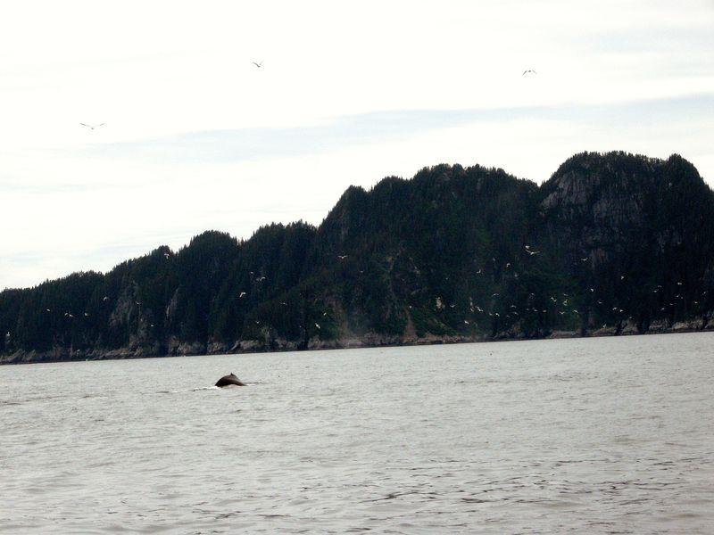 Alaska whale in seward
