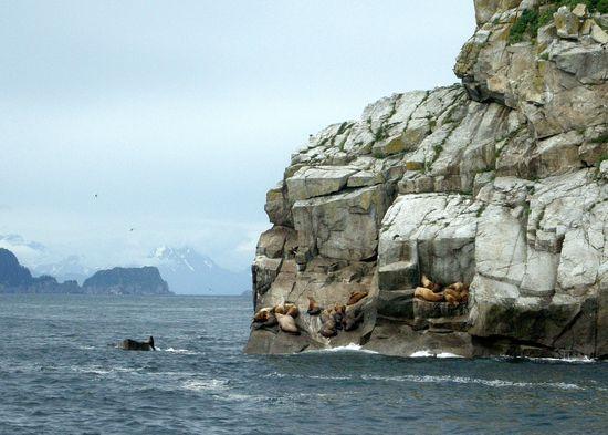 Alaska whale and sea lions