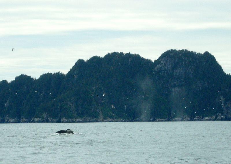 Alaska whale watching seward
