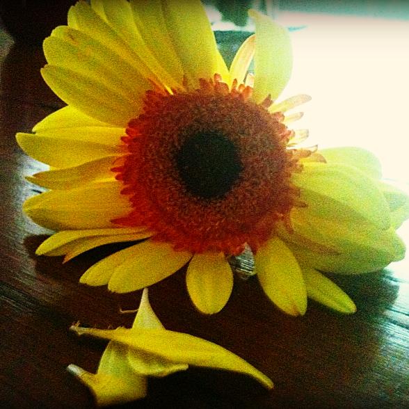 Nates flower