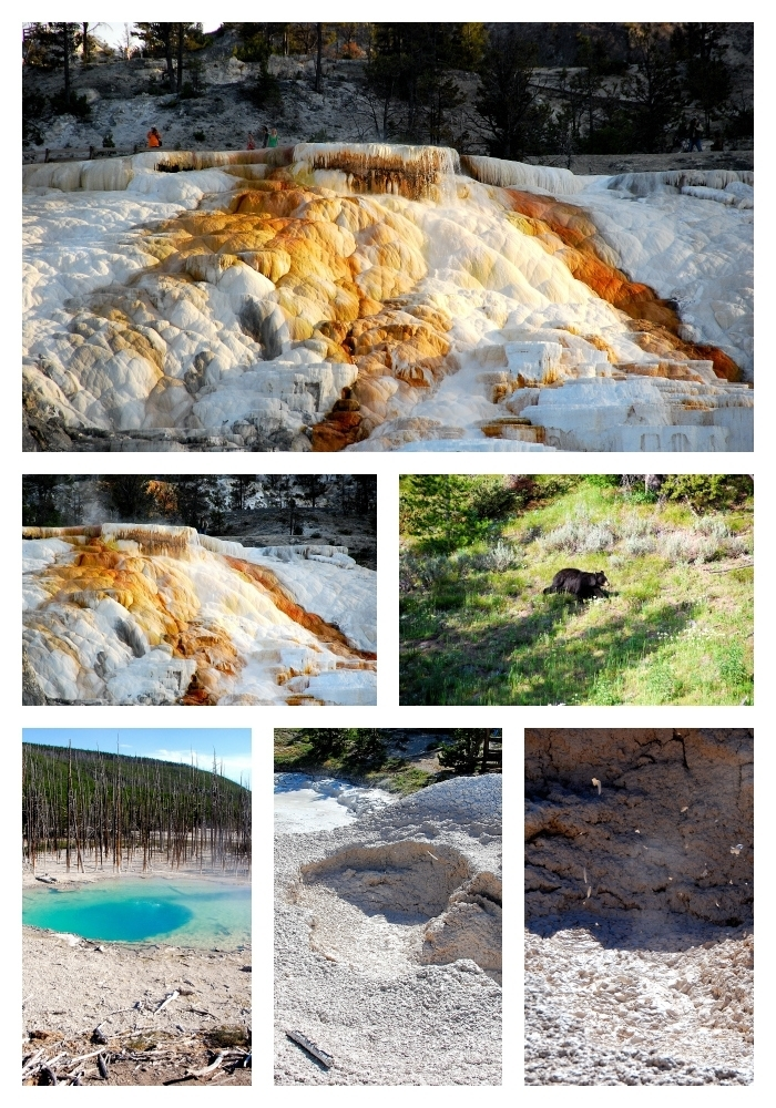 Yellowstone 2 collage