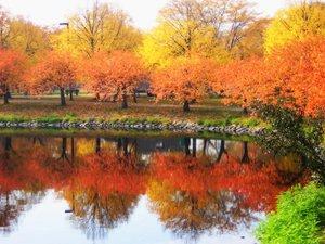 Fall_trees_boston