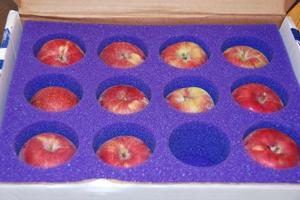 2007_oct_apples_from_resa_15_0745