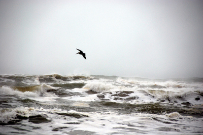 2007_nov_padre_beach_pelican_0880