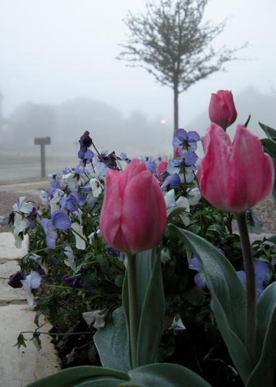 2008_march_morning_fog_1321