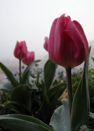 2008_march_morning_fog_1322