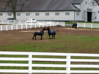 2008_april_ky_horse_park1374