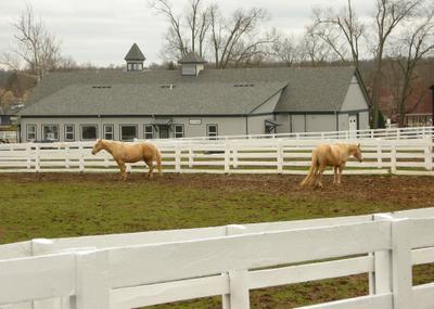 2008_april_ky_horse_park1384