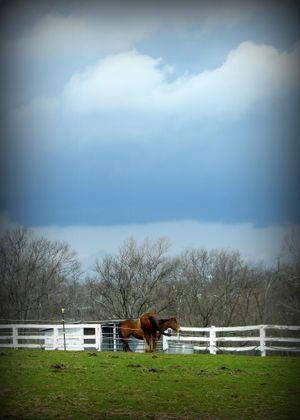 2008_april_ky_horse_park_02_1385