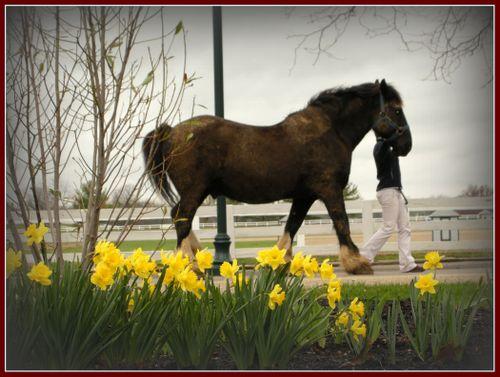 2008_april_ky_horse_park_1_1380_2