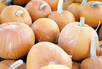 Pumpkins_46