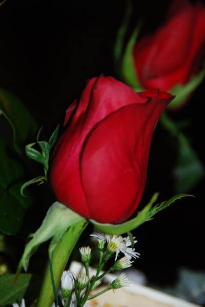 Roses_from_jd