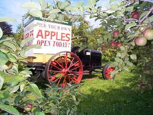 Vermont_apples_1