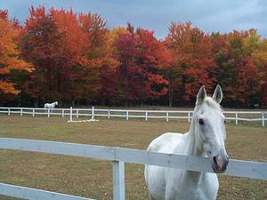 Vermont_equestrian_farm_1