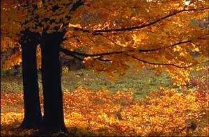 Vt_trees_1