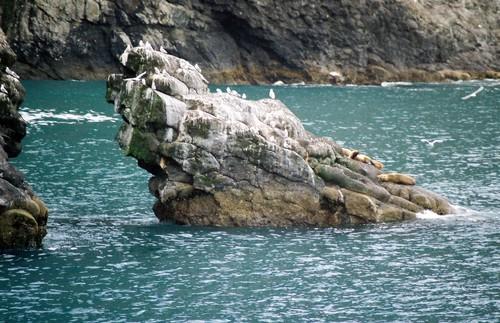 Sea_lion_rock