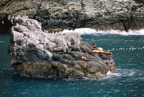 Sea_lions_in_seward