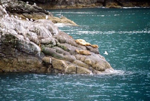 Sea_lions_lazy_days