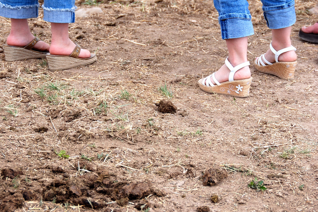 2007_june_horse_shoes0298